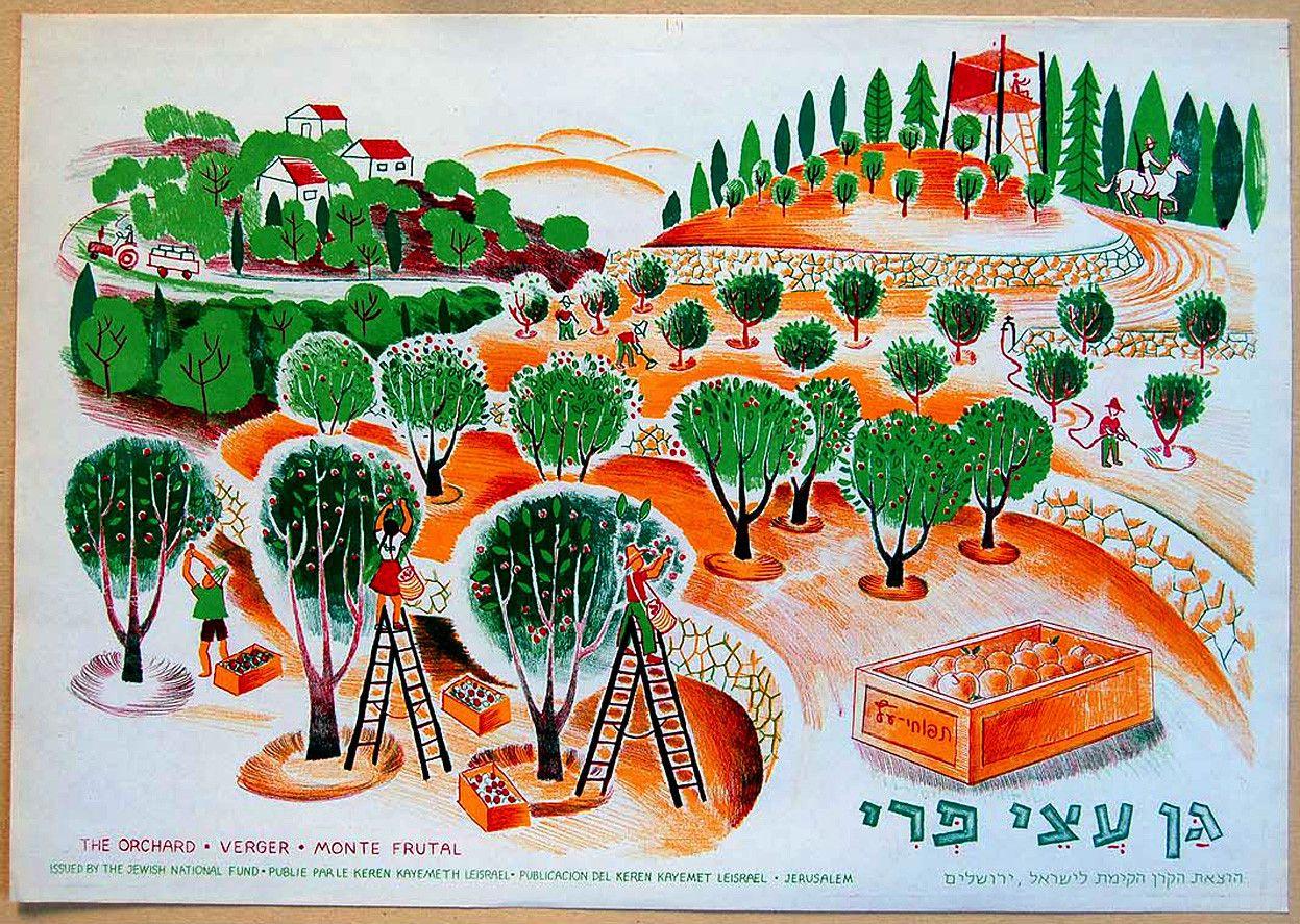 Israel orchard 1960
